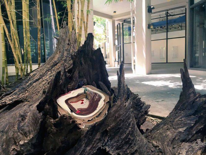 Rush Lee's site specific installation; books arranged in tree stump